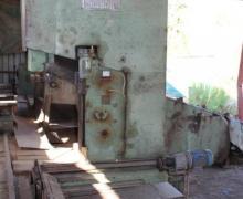 : Primultini - Artiglio_SGP 18_z) Venduto (ARCHIVIO)